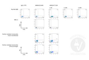 Flow Cytometry validation image for anti-Vitronectin (VTN) antibody (ABIN2477109)