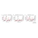 anti-Haemophilus Influenzae Antikörper