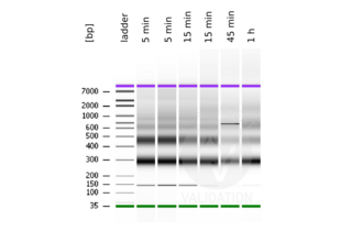 Cleavage Under Targets and Release Using Nuclease validation image for CUT&RUN Pro Set (ABIN6923138)