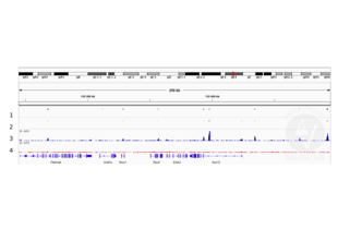 Cleavage Under Targets and Release Using Nuclease validation image for anti-SRY (Sex Determining Region Y)-Box 2 (SOX2) (Center) antibody (ABIN2855074)