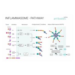 Inflammasome