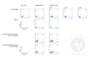 Flow Cytometry validation image for anti-Vitronectin (VTN) antibody (ABIN2477109)