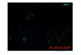 Immunofluorescence validation image for anti-Amyloid beta (A4) Precursor Protein (APP) (AA 666-670) antibody (ABIN197433)