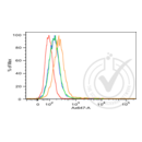 anti-E-cadherin antibody (Cadherin 1, Type 1, E-Cadherin (Epithelial)) (AA 410-460)