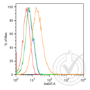 anti-CDH6 anticorps (K-Cadherin) (AA 310-360)