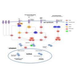 Signalisation NF-kappaB