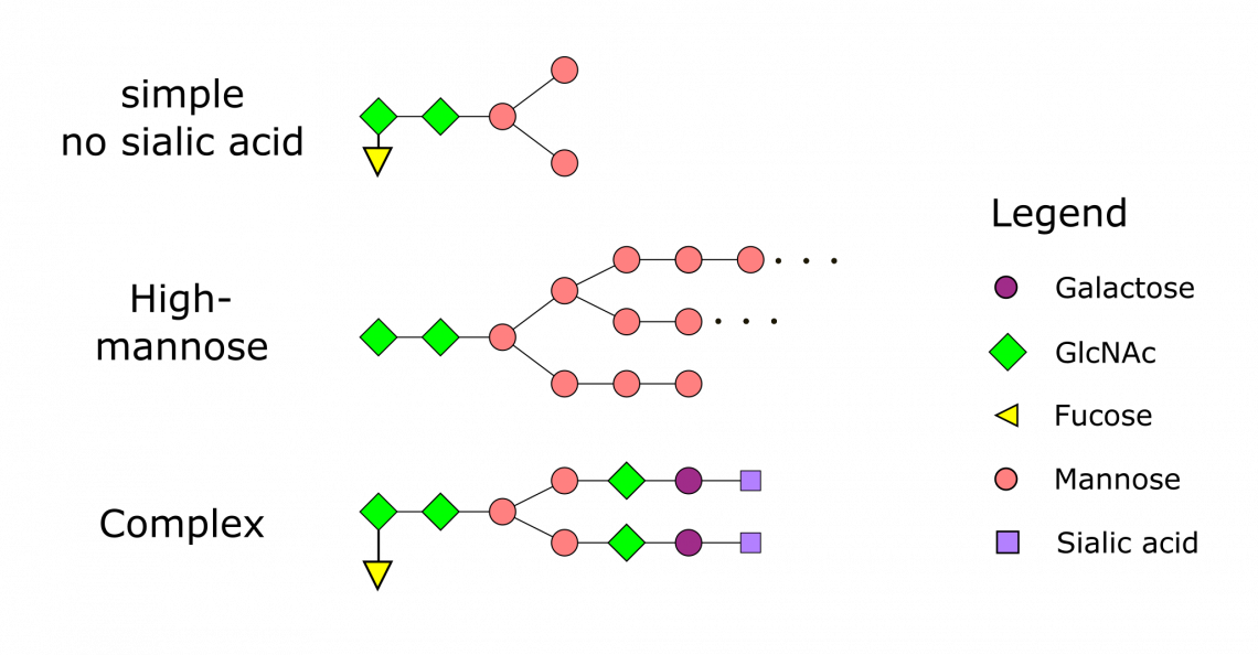 N-Glycosylation Patterns