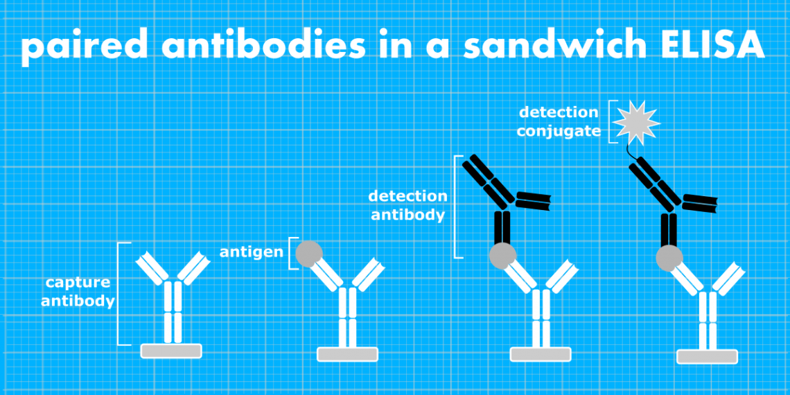 ELISA Pair Antibodies