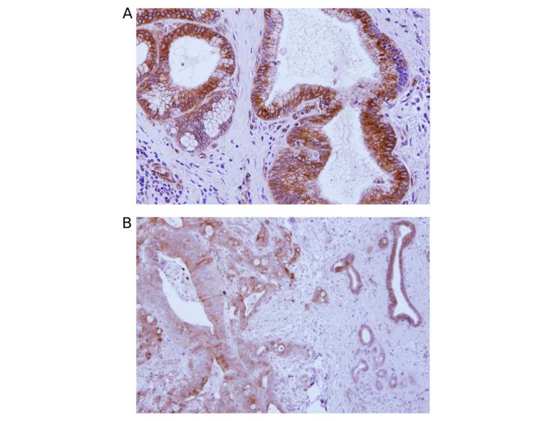 Immunohistochemistry validation image for anti-Transmembrane Protein 173 (TMEM173) (AA 284-316), (C-Term) antibody (ABIN3043423)