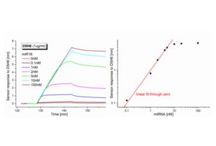 anti-RNA-DNA Hybrid antibody