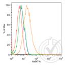 anti-CDH6 antibody (K-Cadherin) (AA 310-360)
