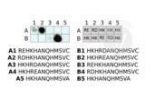 Protein Array validation image for anti-Arginylation (N-Term) antibody (ABIN4368250)