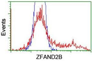 Image no. 1 for anti-Zinc Finger, AN1-Type Domain 2B (ZFAND2B) antibody (ABIN1501807)