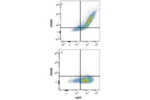 Flow Cytometry (FACS) image for anti-CD28H/IGPR-1 antibody (ABIN4260300)