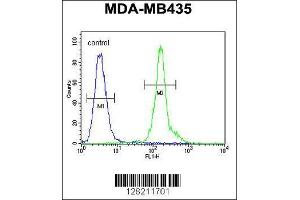 Image no. 1 for anti-C-Type Lectin Domain Family 10, Member A (CLEC10A) (AA 1-30), (N-Term) antibody (ABIN654515)