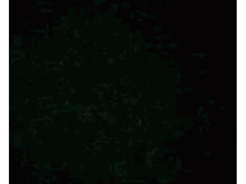 Immunofluorescence (IF) image for anti-Phosphoserine/Threonine antibody (ABIN968873)
