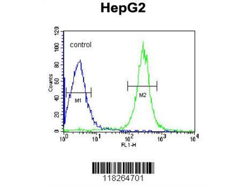 Flow Cytometry (FACS) image for anti-Angiopoietin-Like 4 (ANGPTL4) (AA 138-167), (Center) antibody (ABIN653155)