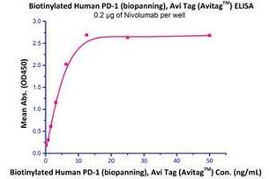 Image no. 2 for Programmed Cell Death 1 (PDCD1) (AA 25-167) (Active) protein (His tag,AVI tag,Biotin) (ABIN2181593)