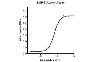 Image no. 2 for Bone Morphogenetic Protein 7 (BMP7) (Active) protein (ABIN1525842)