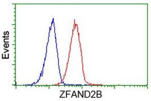 Image no. 1 for anti-Zinc Finger, AN1-Type Domain 2B (ZFAND2B) antibody (ABIN1501805)