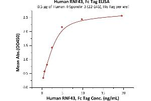 Image no. 1 for Ring Finger Protein 43 (RNF43) (AA 44-197) (Active) protein (Fc Tag) (ABIN7013543)