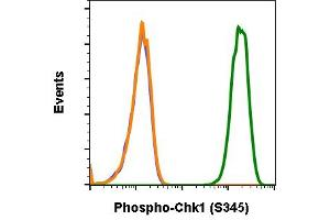 Flow Cytometry (FACS) image for anti-Checkpoint Kinase 1 (CHEK1) (pSer345) antibody (ABIN5671123)