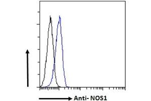 Image no. 6 for anti-Nitric Oxide Synthase 1, Neuronal (NOS1) (C-Term) antibody (ABIN184662)