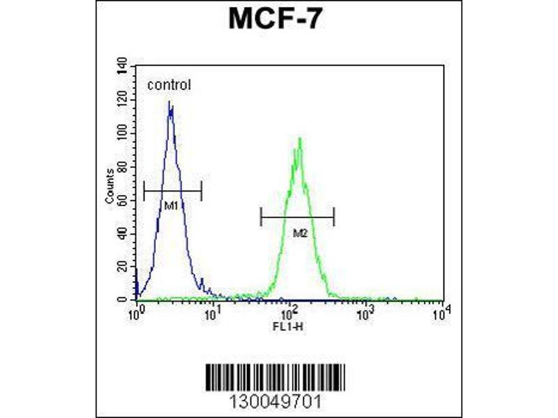 Flow Cytometry (FACS) image for anti-Upstream Transcription Factor 1 (USF1) (AA 174-201), (Center) antibody (ABIN655030)