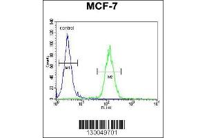 Flow Cytometry (FACS) image for anti-Upstream Transcription Factor 1 (USF1) (AA 174-201), (Center) antibody (ABIN655030)