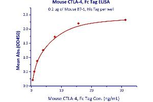 Image no. 2 for Cytotoxic T-Lymphocyte-Associated Protein 4 (CTLA4) (AA 36-162) (Active) protein (Fc Tag) (ABIN2870731)