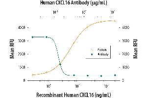 Neutralization (Neut) image for anti-Chemokine (C-X-C Motif) Ligand 16 (CXCL16) (AA 49-137) antibody (ABIN4900386)