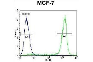 Image no. 2 for anti-Zinc Finger Protein 829 (ZNF829) (AA 134-163), (Middle Region) antibody (ABIN955744)