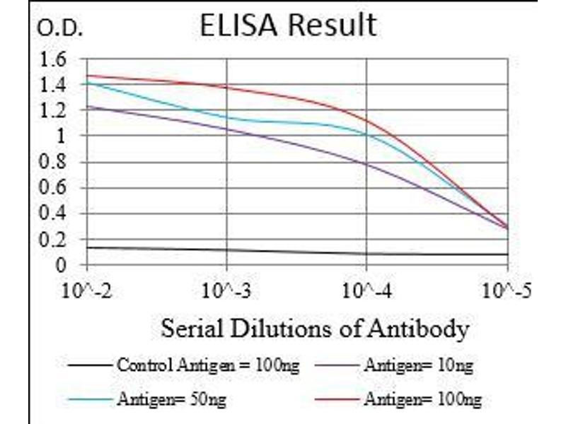 Image no. 1 for anti-Transferrin Receptor (p90, CD71) (TFRC) (AA 608-727) antibody (ABIN1724899)