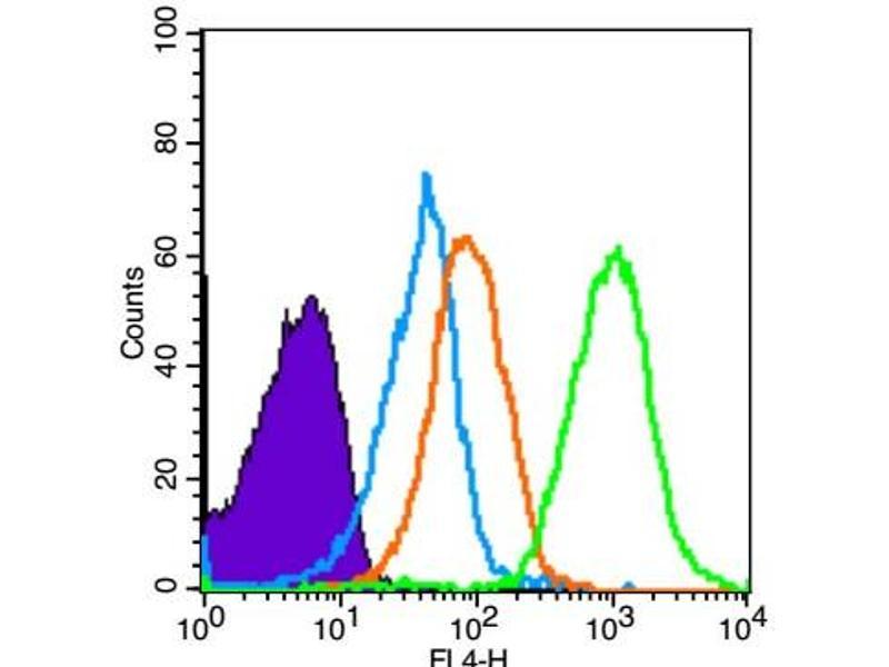 image for anti-KIT Ligand (KITLG) (AA 160-210) antibody (ABIN669936)