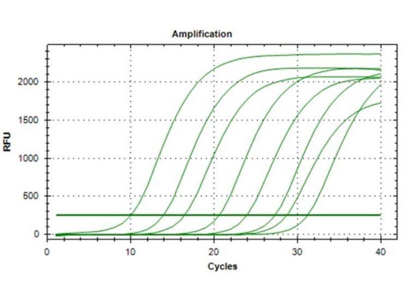 Interferon gamma (IFNG) IQ-ELISA Kit (4)