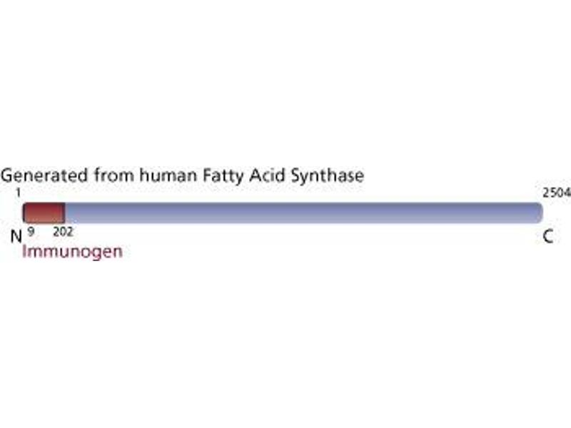 image for anti-Fatty Acid Synthase antibody (FASN) (AA 9-202) (ABIN968279)