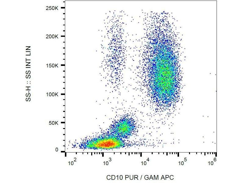 Image no. 3 for anti-Membrane Metallo-Endopeptidase (MME) antibody (PE) (ABIN93937)