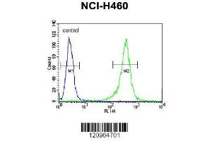Flow Cytometry (FACS) image for anti-Fragile X Mental Retardation 1 (FMR1) (AA 20-48), (N-Term) antibody (ABIN390866)