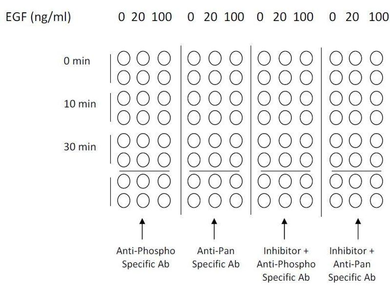 image for ERK1/2, JNK, p38 MAPK ELISA Kit (ABIN1981832)