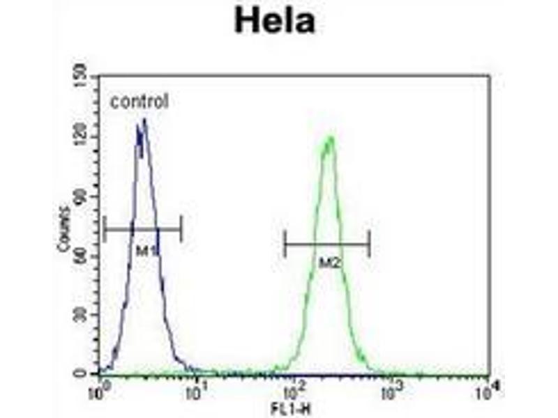 Flow Cytometry (FACS) image for anti-Insulin-Like Growth Factor 2 (IGF2) (AA 46-77), (Middle Region) antibody (ABIN952912)