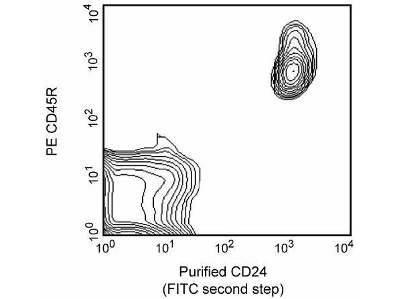 image for anti-CD24 Molecule (CD24) antibody (ABIN967323)