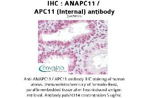 Image no. 2 for anti-Anaphase Promoting Complex Subunit 11 (ANAPC11) (Internal Region) antibody (ABIN1731759)