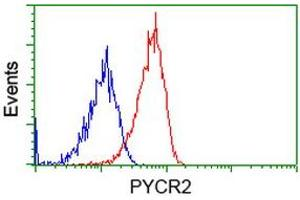 Image no. 2 for anti-Pyrroline-5-Carboxylate Reductase Family, Member 2 (PYCR2) antibody (ABIN1499983)