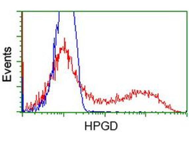 Image no. 5 for anti-Hydroxyprostaglandin Dehydrogenase 15-(NAD) (HPGD) antibody (ABIN1496363)