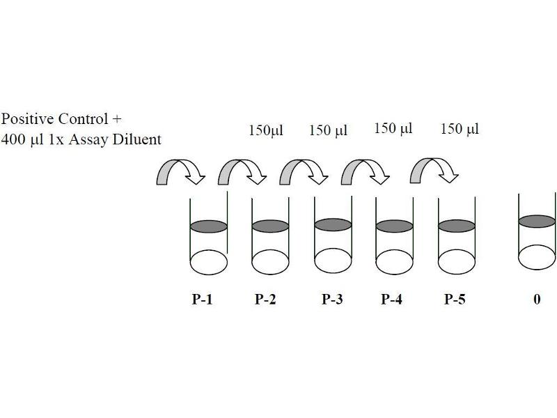 PTK2B Protein tyrosine Kinase 2 beta (PTK2B) ELISA Kit (3)