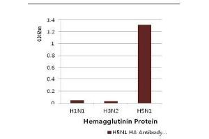 Image no. 2 for anti-Influenza Hemagglutinin HA1 Chain antibody (Influenza A Virus H5N1) (AA 17-338) (ABIN1107750)