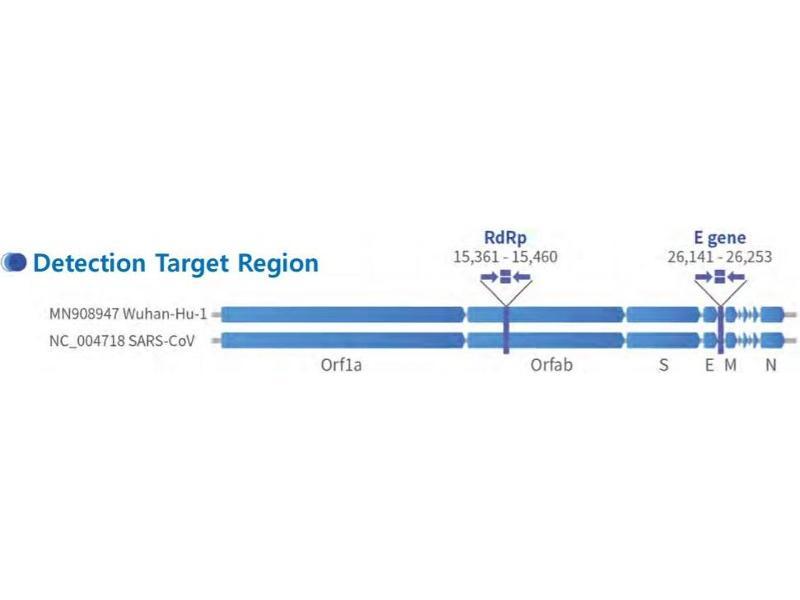 Image no. 5 for 1copy™ COVID-19 qPCR Kit (ABIN6952539)