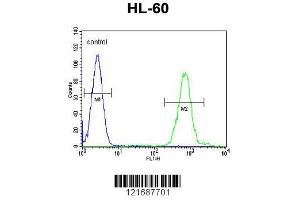 Image no. 3 for anti-Solute Carrier Family 8 (Sodium/calcium Exchanger), Member 1 (SLC8A1) (AA 296-325), (Center) antibody (ABIN652886)