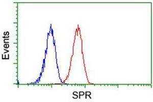 image for anti-Sepiapterin Reductase (SPR) antibody (ABIN1501115)