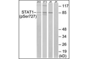 Western Blotting (WB) image for anti-STAT1 antibody (Signal Transducer and Activator of Transcription 1, 91kDa) (pSer727) (ABIN784192)